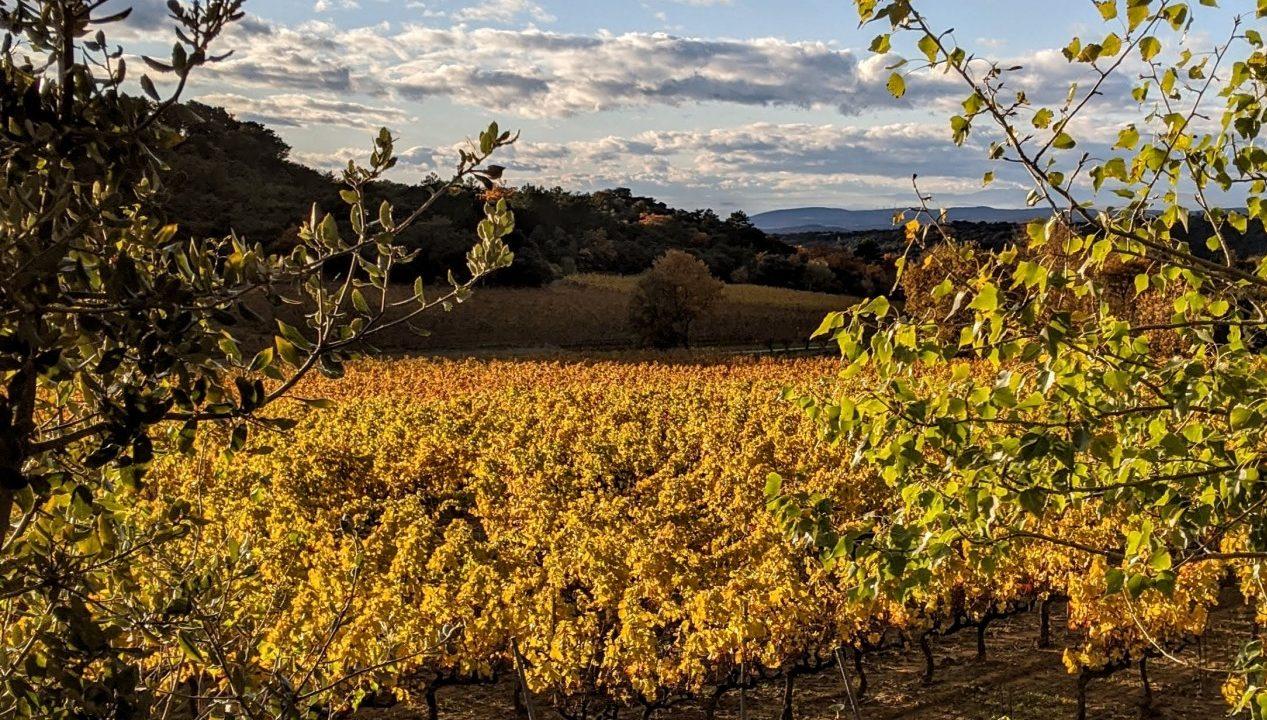 paysage vignes automne
